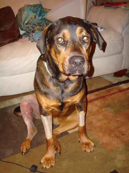 After TPLO surgery in 2008.