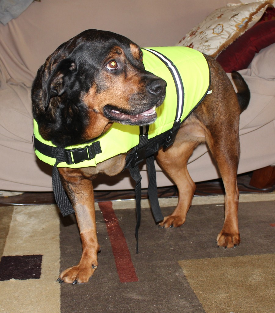 Trying on my fancy new doggie lifevest! Now where's the water?!