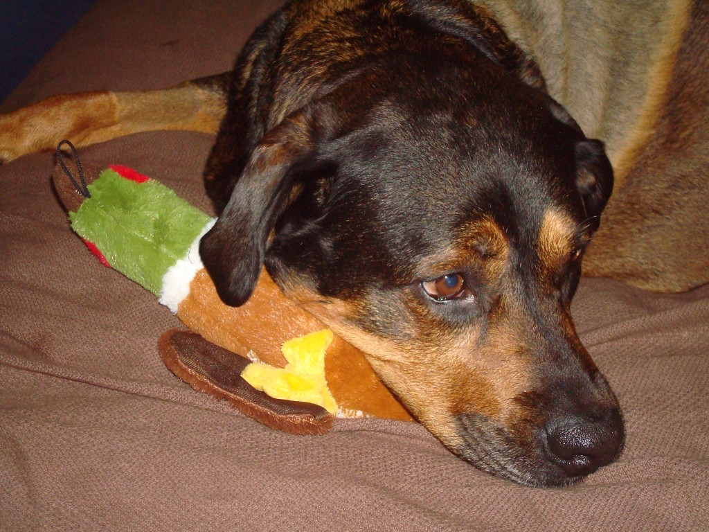 Momma spoiled me with a new honking toy, my favorite!