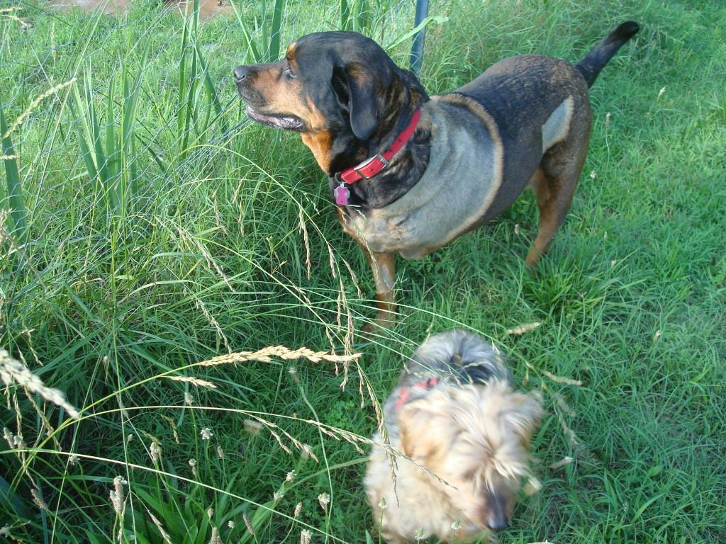 Sniffing the air with my little buddy, Scruffy!