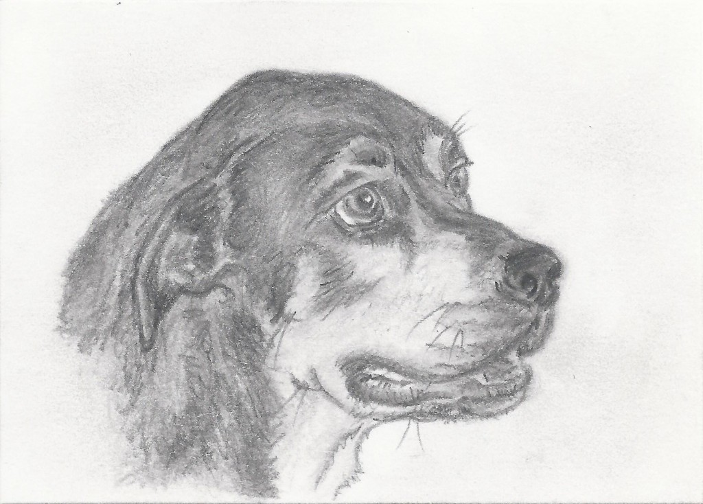 My sketch of Athena.